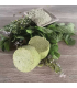 Shampoing solide naturel Vert Dur